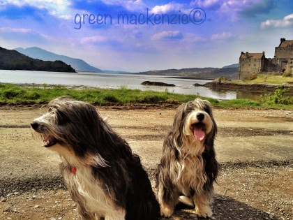 Our Dogs - at Eilean Donnan Castle