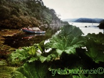 Giant green leaves, Plockton