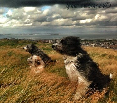 Dogs in green grass, Arthurs Seat, Edinburgh
