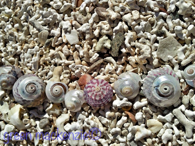 Coral beach shells - Plockton
