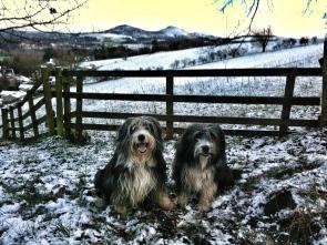 Beardies and the Eildon Hills - February 2012