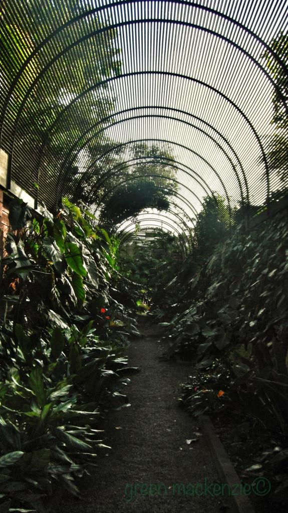Circular plant tunnel: Tenerife Botanical Gardens