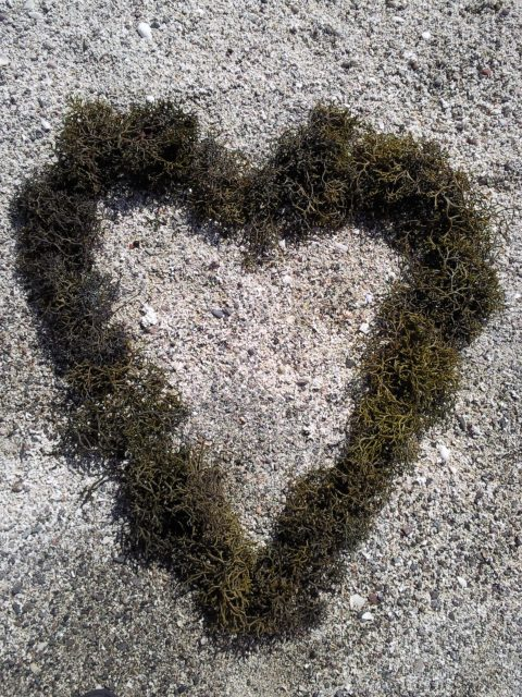 Easter 2010 Seaweed Heart