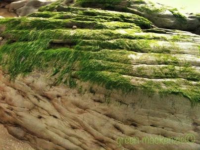 Sea rippled grass