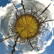 Round grass planet