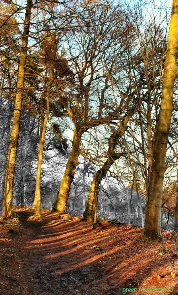 Winter woodland path
