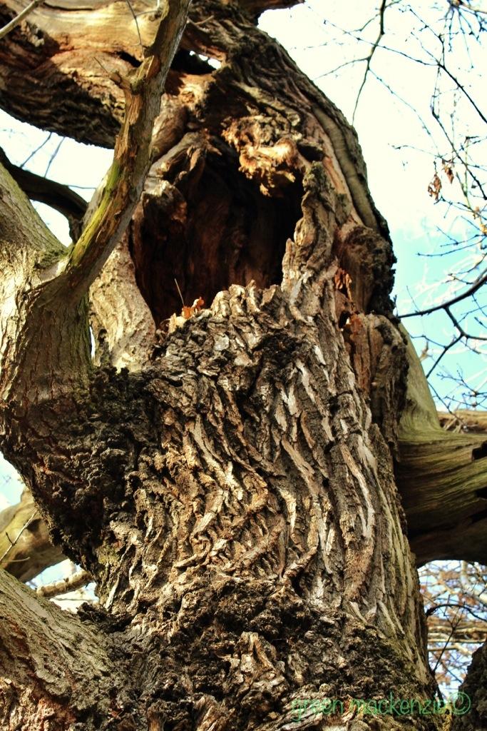 Scary Oak