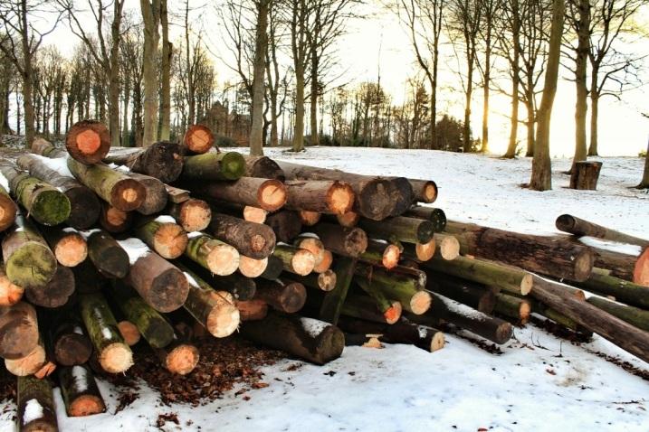 Wood pile - Dalkeith Palace 2013