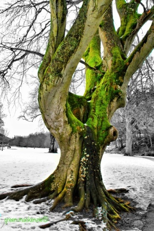 Green Limbed Tree