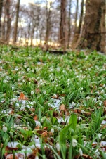 Green winter carpet
