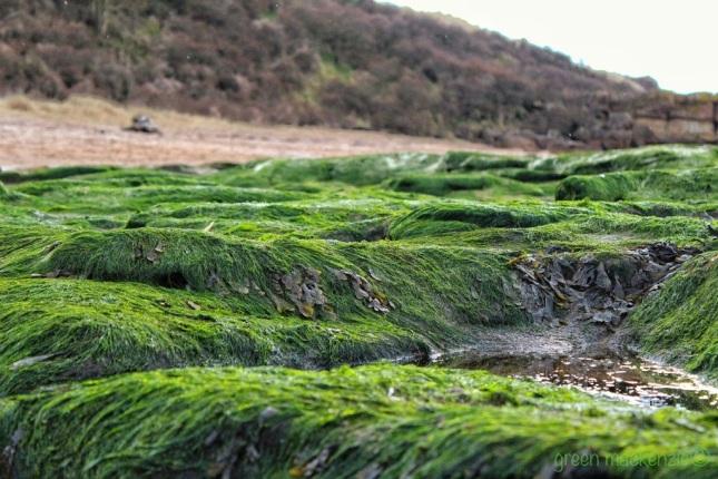 Seaweed Rug - Gullane