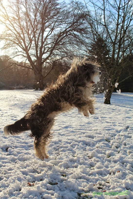 Snowball Lift off