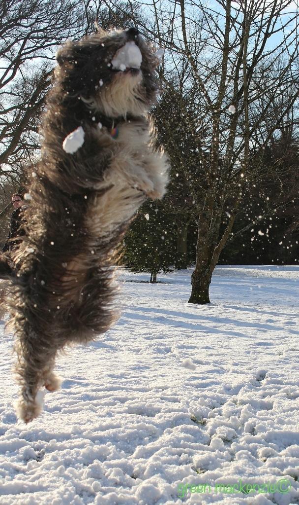 Snowball delight