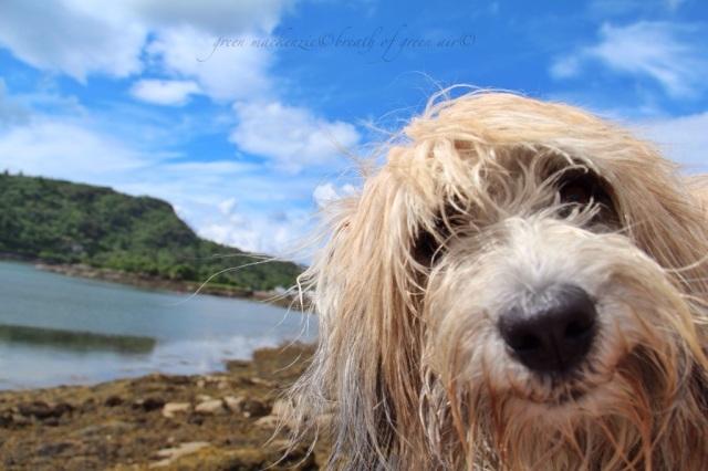 photobombing dog