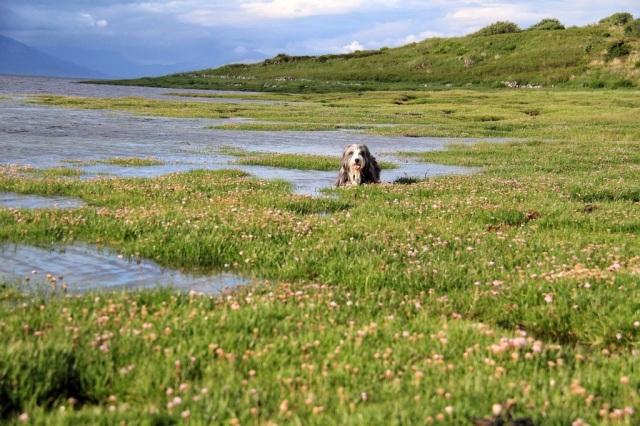 Isle of Skye grass shoreline