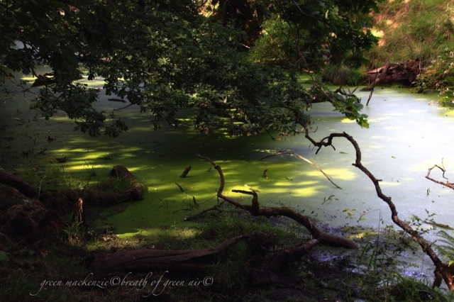 magical green pool.jpg