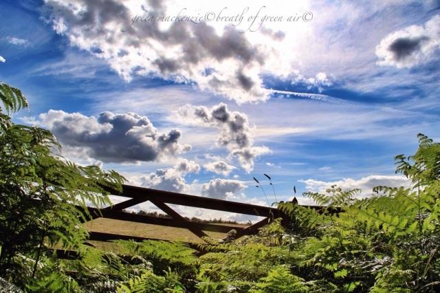 magic clouds over gate and ferns.jpg