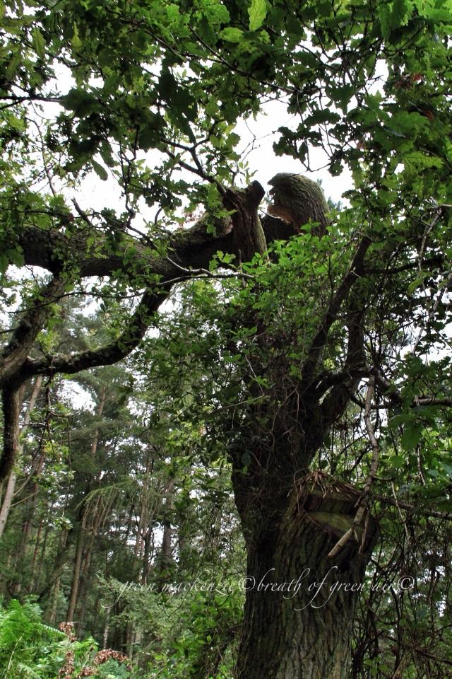 Broken oak tree.JPG