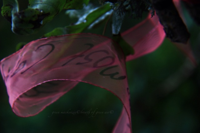 Red ribbon blowing in oak tree.JPG