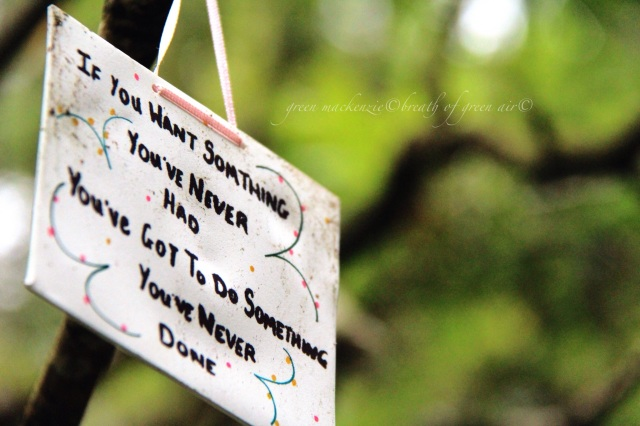 Try something new sign in tree.JPG